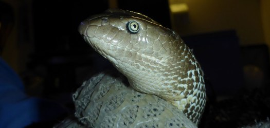 Close-up of a sea snake's head and eye
