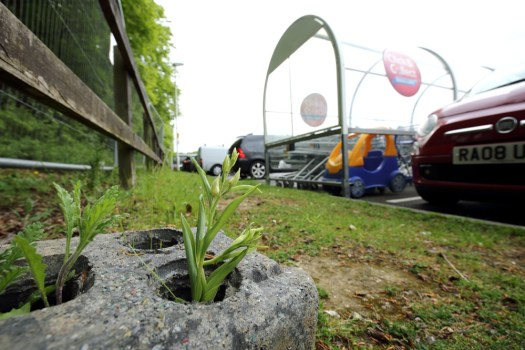 Photo showing an orchid growing put of a hole in a breeze block, near a fence surrounding a car park