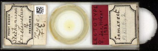 Rectangular glass microscope slide, with old handwritten labels.