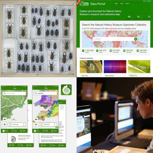 A combination of 4 images. Top left: a drawer of beetles visualised as part of the computer vision research project. Top right: a screen shot of the online Data Portal's home page. Bottom left: Screen shots of the Fossil Explorer app. Bottom right: A volunteer peering at a computer screen.