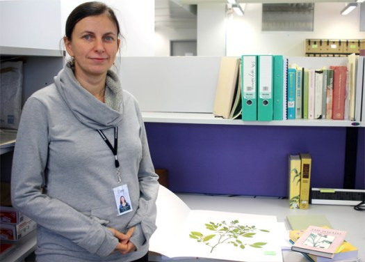 Scientist with a wild potato specimen