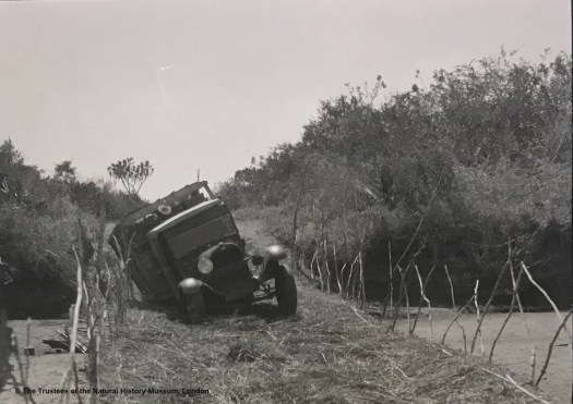 Black and white archival photograph showing a truck crossing a grass strewn wooden bridge, with the vehicle lurching badly to the left after apparently sinking through the surface at the rear of the vehicle
