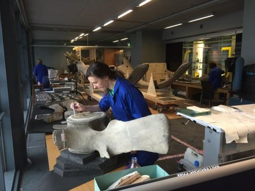 Photo showing the inside of the Pop Up Conservation Studio with a conservator working on a large bone in the foreground. She is using a pipette to perform repair work.