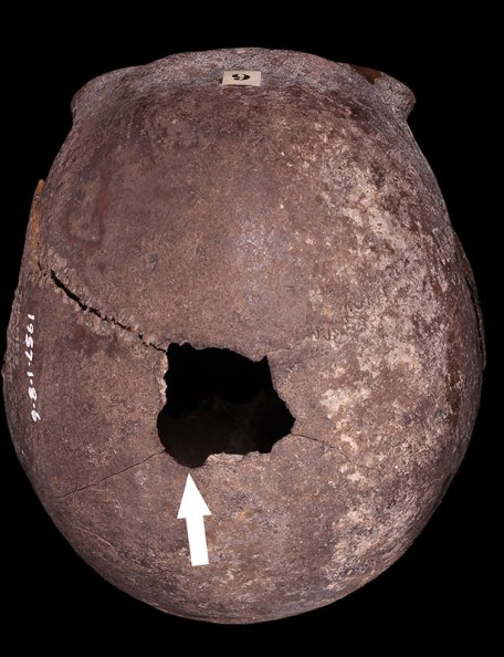 Adult, probable male skull