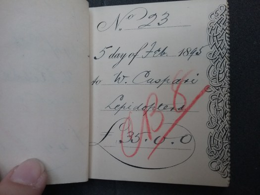 A cheque book stub open, with the author's finger holding it in place on the left hand side. The left page is blank. In a mixture of print and ink handwriting the right hand page reads 'No. 23, 5 day of Feb. 1895. To W. Caspari, Lepidoptera, £35.00. The stub is struck through in red pencil diagonally from bottom left to top right with what looks like CB 8