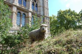 Photo showing a sheep standing side on looking at the camera. It is on a hillock cover in grasses and other plants, with a row of trees and the southwest edge of the Museum building visible in the background.