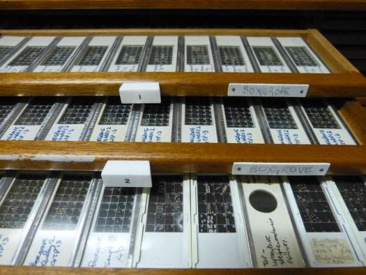 Boxgrove_microfossil_slides