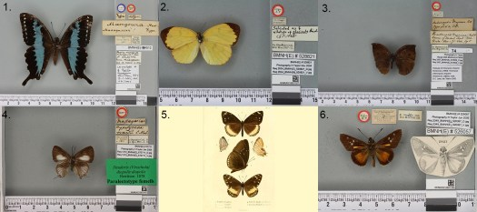 1) Madagascan butterflies
