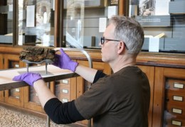 Exhibition specialist Darren Dickson, making sure the specimens are mounted correctly.