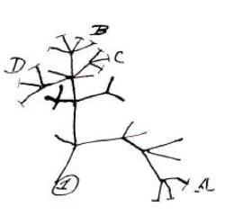 darwin's tree evolution