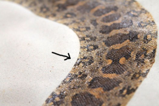 Patrick Russell snake skin volume (4)