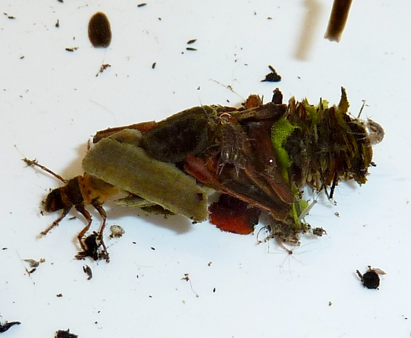 A Caddis Fly case