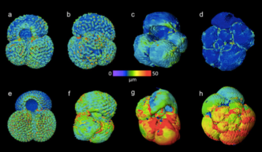 CT scans Foraminifera
