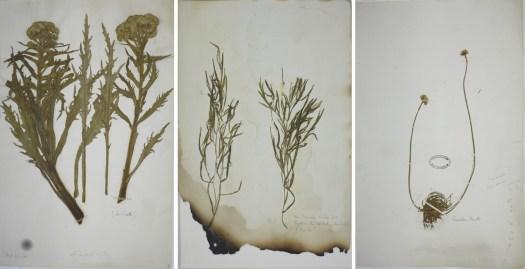 Lincs specimens