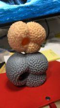 3D foraminiferal prints