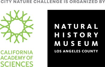Logos of organisers: City Nature Challenge is organised by California Academy of Sciences and Natural History Museum Los Angeles County.