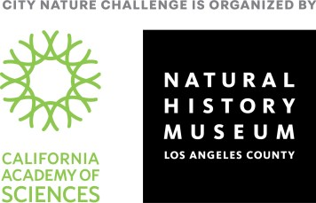 City Nature Challenge is organised by California Academy of Sciences and the Natural History Museum Los Angeles County.