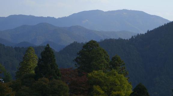 shrine-Kyoto forest bathing