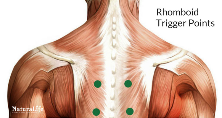 pressure points diagram massage where are your lungs located in back melt away headaches with trigger point therapy rhomboid