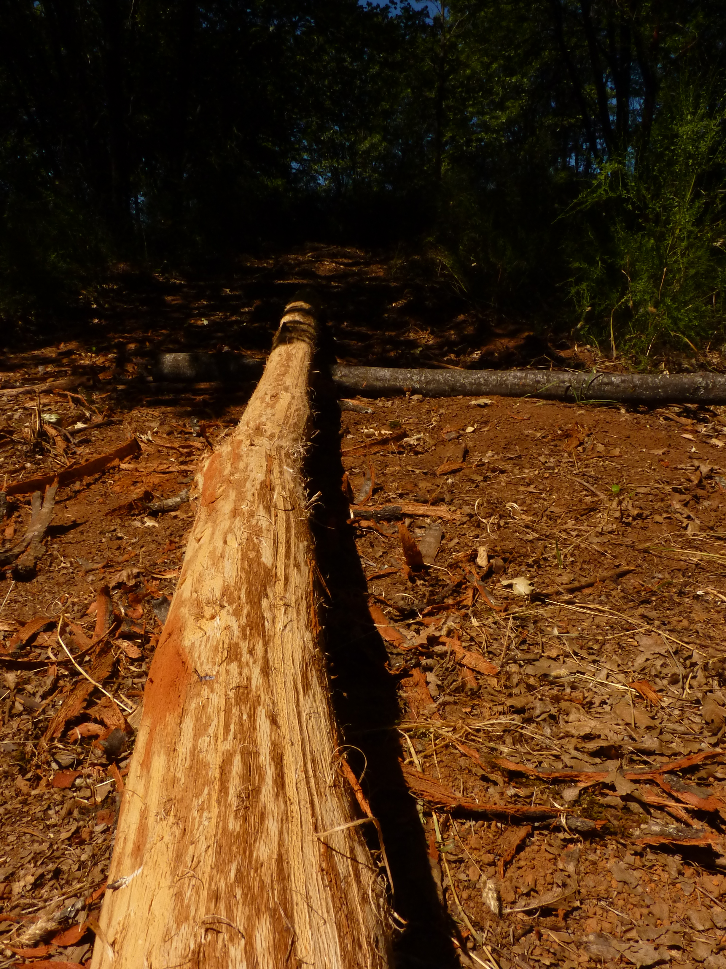How To Debark A Log By Hand