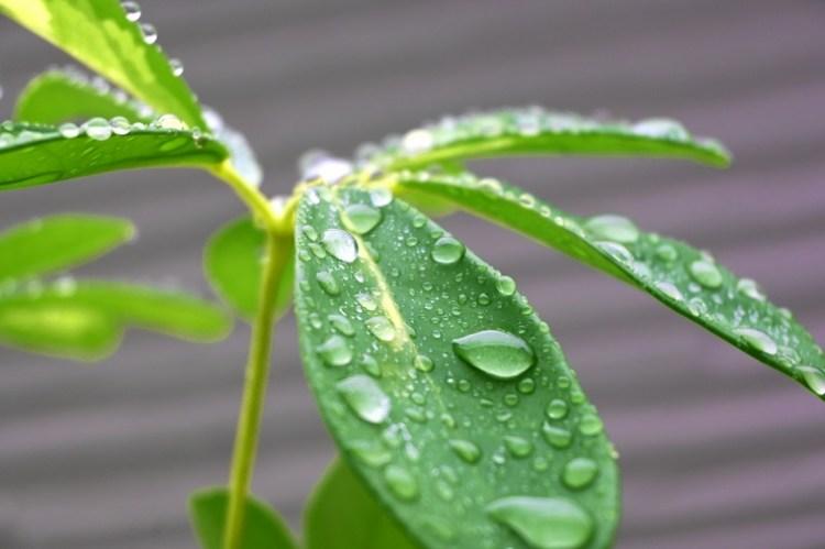 葉っぱの雨粒