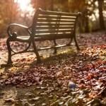 誰もいない公園のベンチ