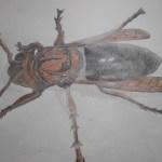 チャイロスズメバチの絵