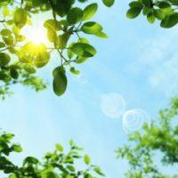 紫外線と葉の写真