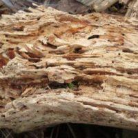 朽木の写真