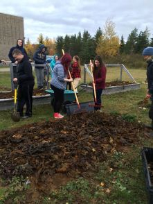 cabotstudents-spreading-seaweed-mulch-oct-2016