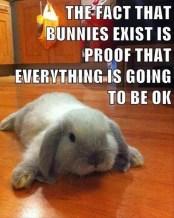 bunnyproof