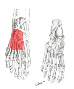 foot pain top
