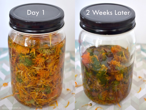homemade calendula oil 2 weeks later