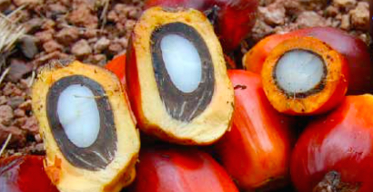 open palm fruit for homemade soap without palm oil