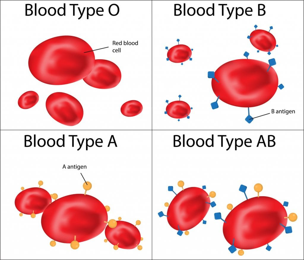 Why Blood Typets Don T Work Understanding Polymorphism
