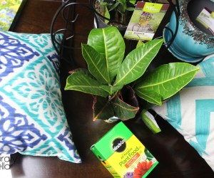 Add Some Summer To Your Small Apartment | Naturally Stellar