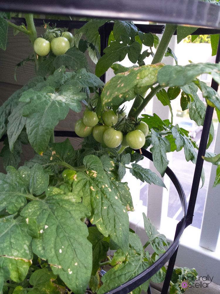 Summer Balcony Vegetable Garden Fail and Lessons Learned | Naturally Stellar