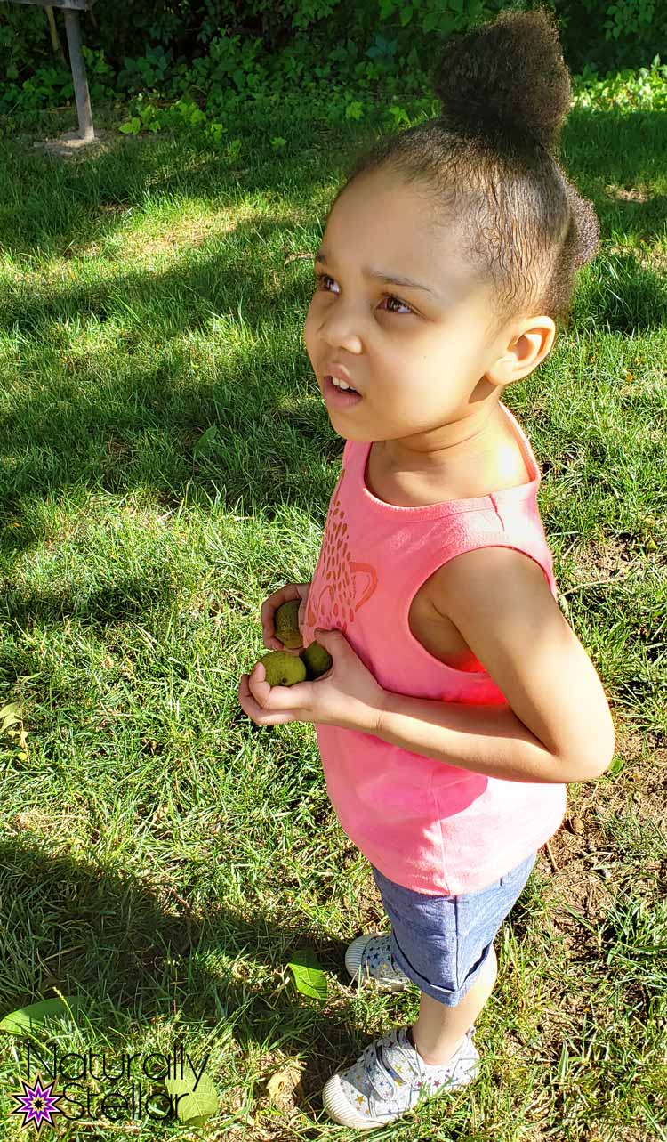 STEM and STEAM activities to keep kids busy. Discovering Black Walnut Seeds   Naturally Stellar