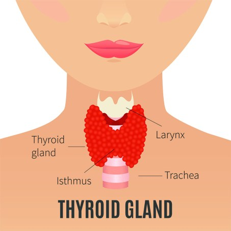 Graphic image of the thyroid gland and it's position on the neck.