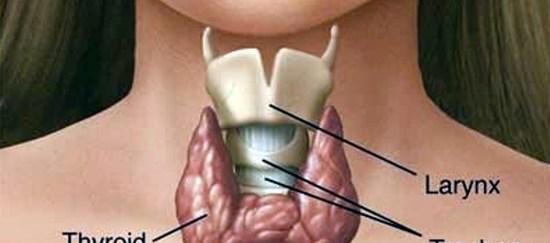 Factores que alteran la tiroides