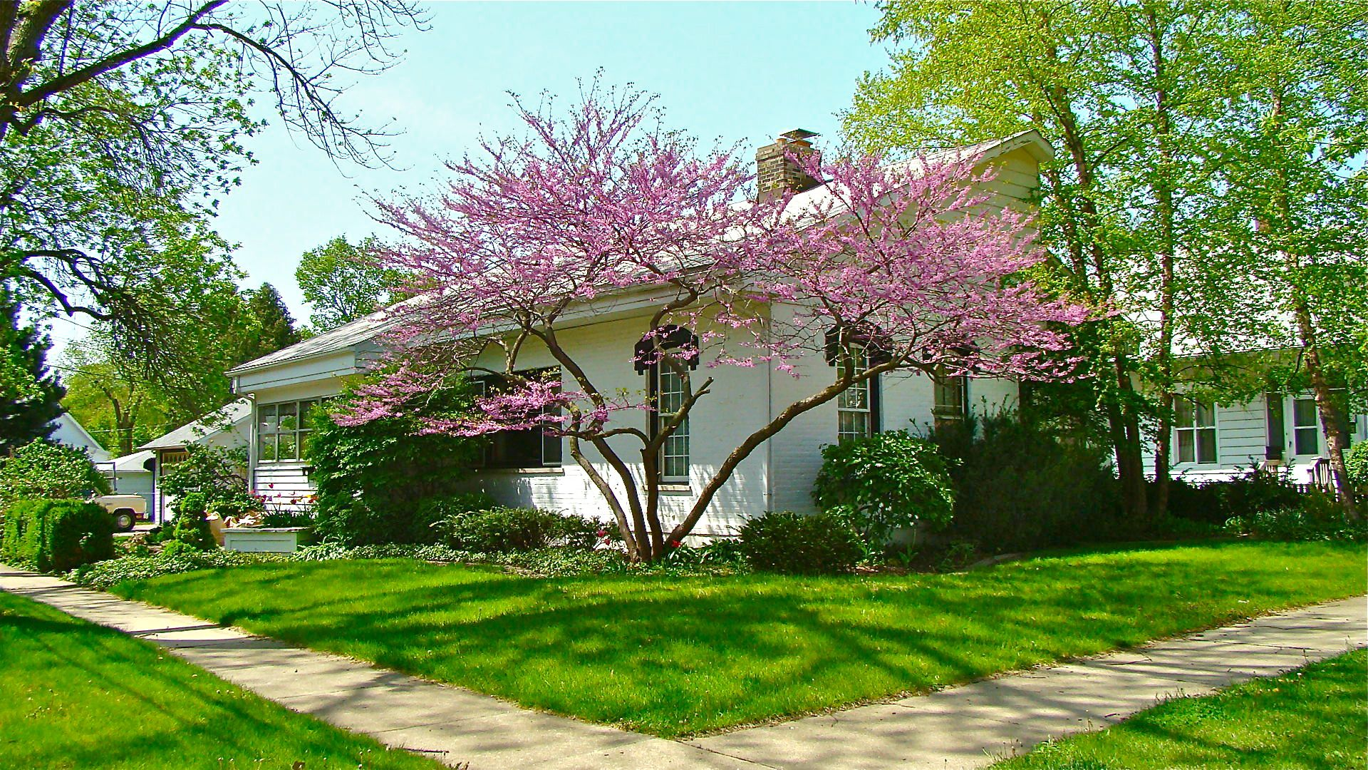 Native Flowering Trees Pat Hills Natural Midwest Garden