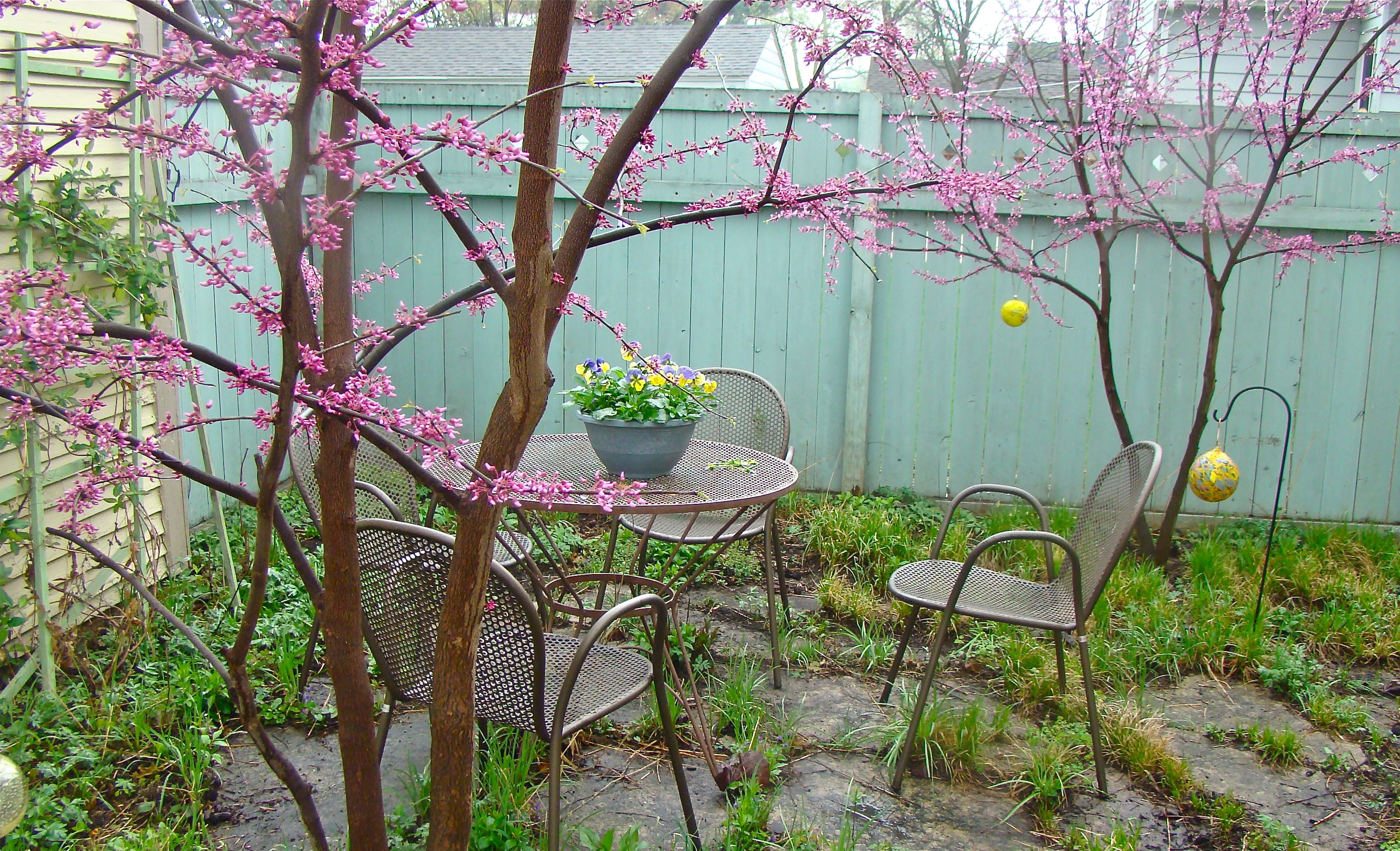 Joshua Tree Wildflowers Guía • James Kaiser