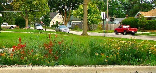 Cardinal flower Veg