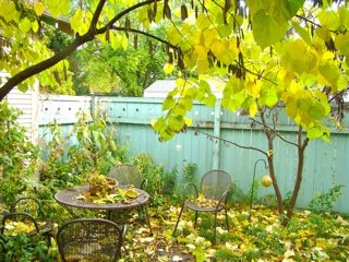 patio w: leaves