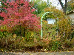 Black Haw fall foliage
