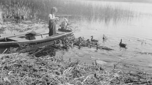 ducks at Popple Lake