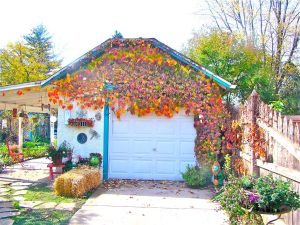 vine on Kathy's garage
