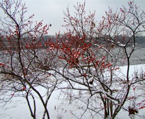 winterberry overlooking fox river