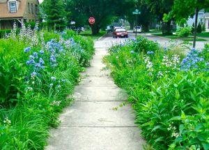 blue and white June garden
