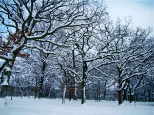 white-oak-bfp